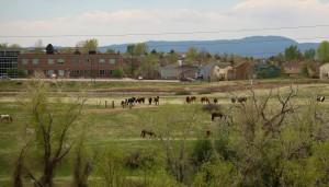 Santa Fe Drive Images 5-18-13 Horse Edit